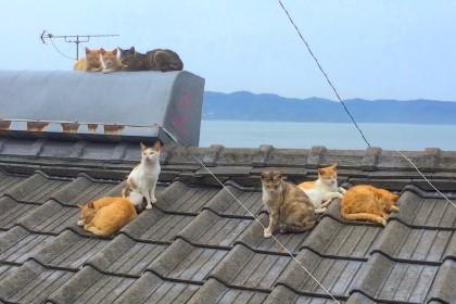 「瀬戸内海に浮かぶ、「アート」と「猫」の島。男木島(おぎじま)は走っても楽しい島だった!!」の画像