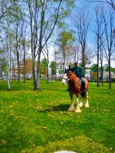 「競馬×ランナー必見!!一口馬主権とサラブレッドに乗って表彰式に参加できる「ノーザンホースパークマラソン」【大会レポ】」の画像