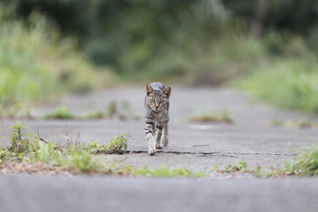 「島民は約50名、猫が約120匹!宮城県の猫の島、「田代島」へラントリップしてきました。」の画像