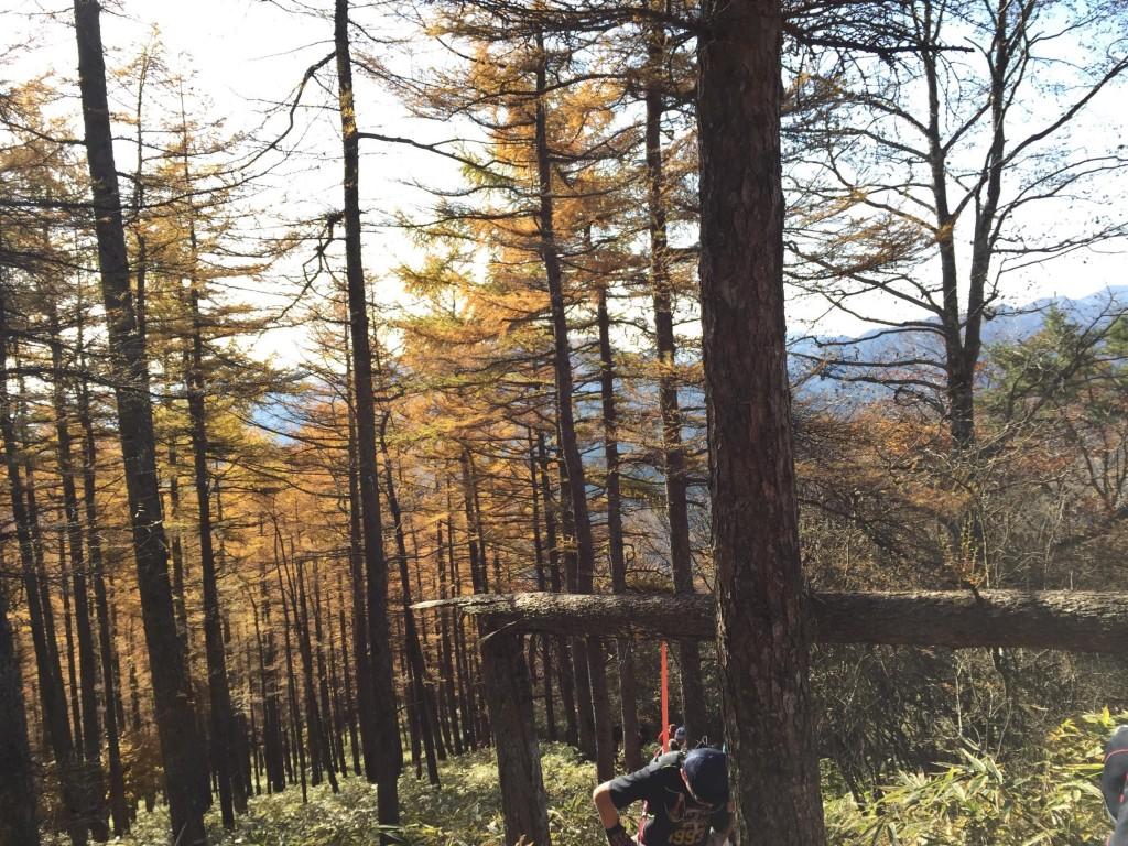 「世界遺産を走る!日光国立公園マウンテンランニング大会はトレイルビギナーでも楽しい。」の画像